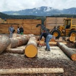 Cutting logs to length