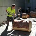 Peeling logs in a hot sun